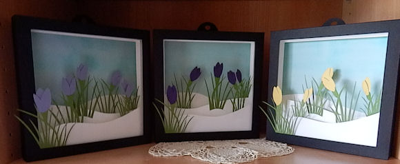Crocus in the snow shadow boxes