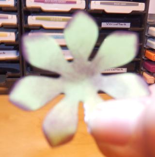Succulents petal overlap