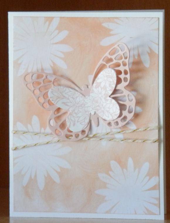 Bold Butterflies