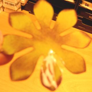 Succulents petal glued